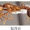 평택항에서 붉은불개미 20여 마리 발견…검역본부, 소독ㆍ방제조치