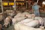 중국 여행객 소시지ㆍ햄버거서 아프리카돼지열병 바이러스 유전자 검출