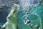 [알아두는 여행 tip] 거대한 악어와 바닷속에서 수영하기