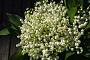 신부 조수애 웨딩마치, 은방울꽃 부케 꼭 쥔 손 '화제만발'…사람 손 온도에 시드는 예민한 꽃