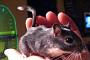 지난해 실험용 동물 372만 마리 사용…쥐ㆍ어류ㆍ닭 순