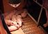 [속보] 아프리카돼지열병 의심 파주 농가 2곳, 정밀검사서 음성 판정