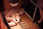 아프리카돼지열병 의심 김포 농장서 돼지 1마리 폐사 추가 확인