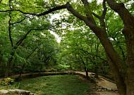 도심에서 한 걸음만 들어서면 숲이요, 계곡이다