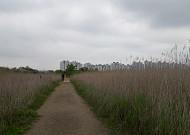부드럽게 감싸주는 길, 소래습지 생태공원