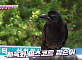 까마귀 깜순이, 체육공원 마스코트 등극 '친화력 갑'