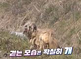 '동물농장', 떠돌이 개 '멍멍' 구조 작전…한 아주머니와의 감동 이야기