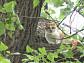 백운사 나무 위의 고양이 '뚱순이', 열흘 넘도록 내려오지 않는 이유는?