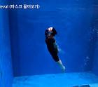 """박찬이, 이근 대위 네이비씰 포박수영 훈련 """"쉽게 생각하고 갔다가 충격 받고 왔네요"""""""