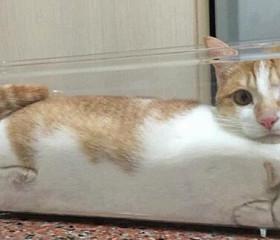 어딘가 고장난 귀여운 고양이들.gif