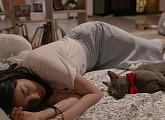 [독립영화관] 나만없어 고양이, 사랑이ㆍ복댕이ㆍ수연이ㆍ순자…진짜 고양이가 주인공(ft.김희철)