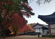 내가 사랑한 한국의 가을