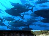 지상의 아틀란티스 멕시코, 엔세나다 가두리 참치 양식장ㆍ엘 엘레간테 위ㆍ나이카 광산 수정 동굴(세계테마기행)