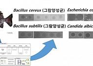 국립수산과학원, 돌돔에서 대장암 억제물질 개발 성공