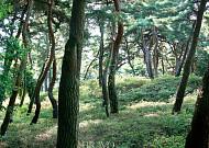 '유산기'(遊山記)로 본 조선 선비들의 산행 방법
