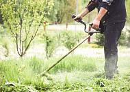 벌초나 성묘할 때 쓰쓰가무시·유행성출혈열 조심해야