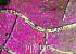 [포토] 드론으로 본 군포 철쭉축제, '분홍 봄기운이 절정'