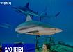 상어떼와 화보 찍은 강심장 모델
