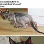희귀 돌연변이 '늑대 고양이' 남아공에서 발견