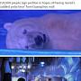 """'세상에서 가장 슬픈 북극곰'…""""풀어줘라"""" 청원 이..."""