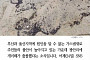 [카드뉴스] 부산·울산 가스 냄새이어 광안리 개미떼 대이동… 지진 전조 현상?