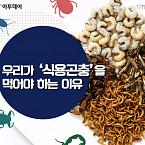 우리가 '식용곤충'을 먹어야 하는 이유