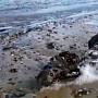 해변가서 발견된 '죽은 인어공주'…진실은?