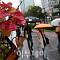 """[일기예보] 오늘 날씨, 전국 대체로 맑음·제주도에 비…'서울 낮 18도' 쌀쌀 """"미세먼지 오후 '나쁨'"""""""