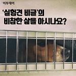[카드뉴스 팡팡] '실험견 비글'의 비참한 삶을 아시나요?