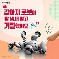 """[카드뉴스 팡팡] """"강아지 로봇이 발 냄새 맡고 기절했어요ㅠㅠ"""""""