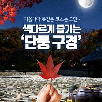 [카드뉴스 팡팡] 가을마다 똑같은 코스는 그만~ 색다르게 즐기는 '단풍 구경'