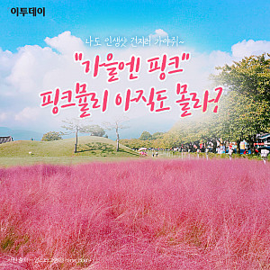 """[카드뉴스 팡팡] """"가을엔 핑크"""" 핑크뮬리 아직도 몰라?"""
