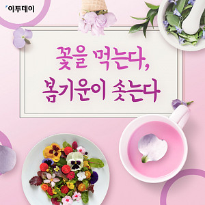 [카드뉴스 팡팡] 꽃을 먹는다, 봄기운이 솟는다