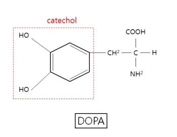 ▲도파(DOPA)의 화학적 구조식