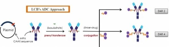 ▲레고켐바이오가 개발한 ADC 기술. 모티브를 첨가함으로 물질이 부착되는 부위를 확정, 균일한 단일물질 생산이 가능하다. (제공: 레고켐바이오)