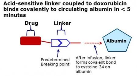 ▲내부 알부민을 이용해 종양을 타깃하는 Cytrx 모델출처: Cytrx