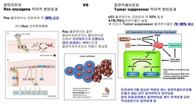 ▲항암바이러스의 암치료 작용원리 (Ras와 Tumor supressor 비교)출처: 주식회사 바이로큐어 제공