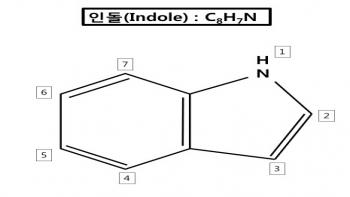 ▲인돌(Indole)구조