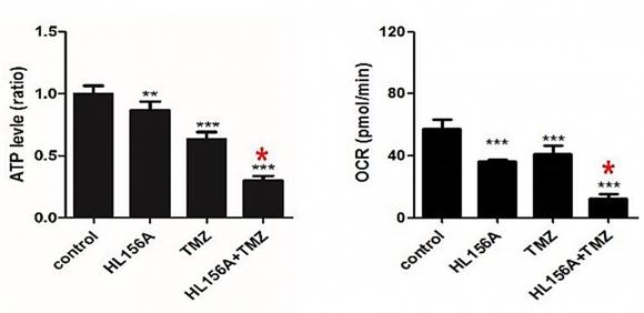 ▲새로운 형태의 바이구아나이드계열 약물(HL156A)을 기존의 항암제(TMZ)와 병용 투여 하였을 때 세포 에너지대사물인 ATP의 양이 약물을 투여하지 않았을 때 보다 70%가량 감소했다. 암줄기세포의 산소소비비율도 80%정도 감소된 것을 확인할 수 있다. 세브란스병원 제공.