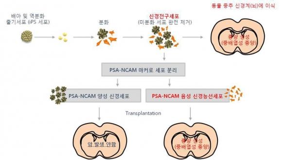 ▲연세대 김동욱 교수 연구팀 배아줄기세포 특허기술