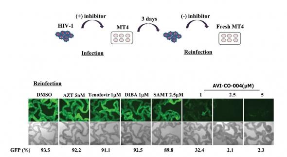 ▲전임상 세포실험에서 재감염률 측정 결과.(출처: Identification and characterization of a new type of inhibitor against the HIV type-1 nucleocapsid protein, Retrovirology 2015)