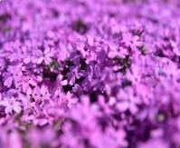 봄날이 간다