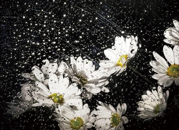 ▲The Starry Night #05 69.9x50.8cm 2015(김경수 사진작가)