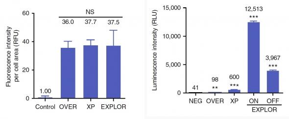 ▲타사의 경쟁기술(XP)과 EXPLOR의 탑재효율 비교 결과. 세포 내 타깃 발현율은 비슷하지만 배출된 엑소좀 내부 탑재효율은 월등히 차이가 난다. (제공: 셀렉스)