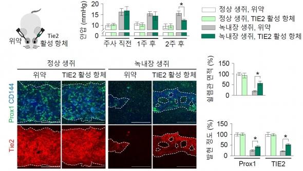 ▲녹내장 유발 모델에 실험적 항체를 적용한 실험 결과 (제공:IBS)