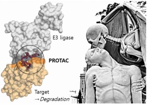 ▲PROTAC과 단백질의 만남. (가운데: PROTAC, 회색: E3효소, 오렌지: 표적단백질 Brd4)출처 던디대학교 Alessio Ciulli 웹사이트