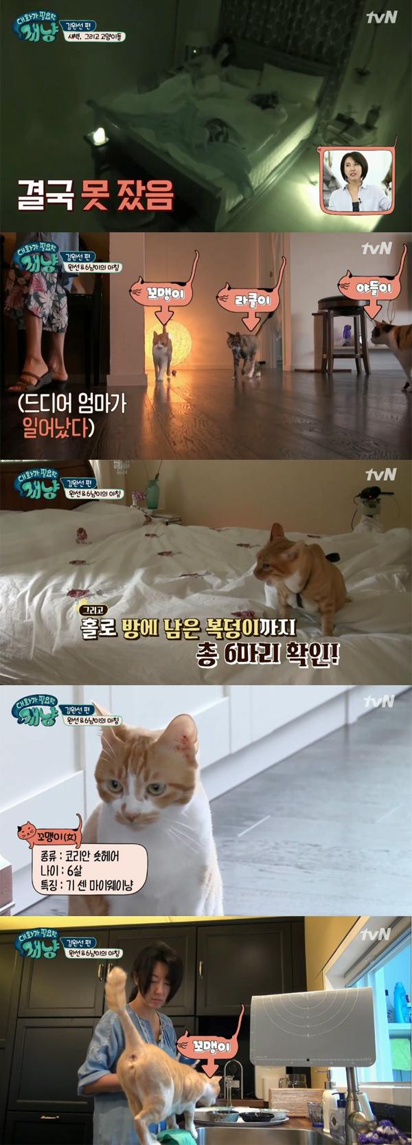 ▲'대화가필요한개냥' 5회 캡처(사진=tvN)