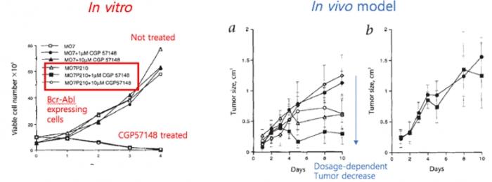 ▲그림 4 GCP57148에 의한 Bcr-Abl 발현 세포의 특이적인 사멸 및 모델동물에서의 종양 억제 [11]그러나 이러한 고무적인 초기 연구결과에도 불구하고 이 약물의 개발은 순조롭게 진행되지 않았다. 이것이 약물로써 개발되기 위해서는 추가적으로 여러가지 난관을 극복해야만 했다.