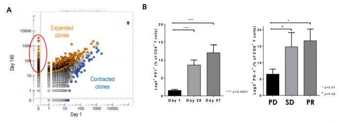 ▲AM0100 투여에 따른 T세포 변화.  A 환자 혈액내 작은수로 존재했던 특정 T세포 클론이 10배 이상 증폭, B PD-1+Lag-3+CD8+ T세포와 종양반응성과의 연관성