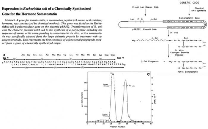 ▲그림 4 재조합 DNA 기술을 이용한 대장균에서의 인간 소마토스태틴 생산[5]. 소마토스태틴은 14개의 아미노산으로 이루어진 매우 작은 단백질으로써 독립적으로 발현되었을때는 쉽게 분해되었지만, 대장균의 베타-갈락토스분해효소 (beta-galatosidase)와 융합 단백질 형태로 발현된 후, 시아노겐 브로마이드 (CNBr) 라는 화학물질 처리로 분해하여 정제할 수 있었다. 이를 합성하기 위하여 8개의 DNA 단편을 화학적으로 합성하였고, 대장균에서 생산된 소마토스태틴이 활성을 가진다는 것을 확인하였다.